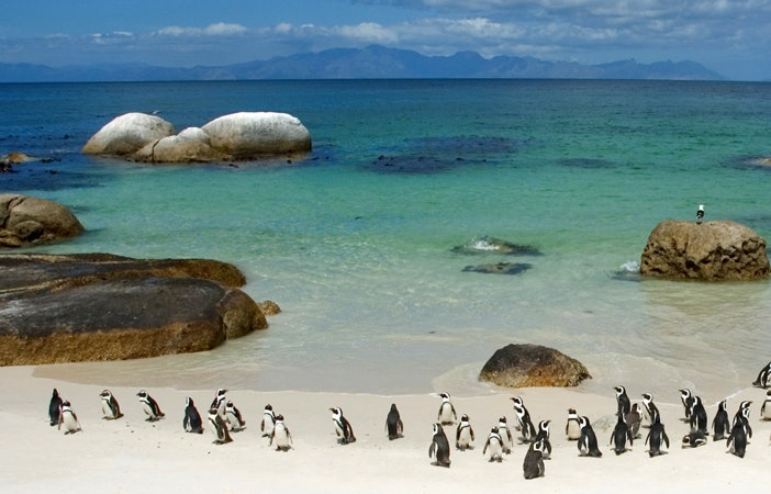Penguins-Boulders-Beach-South-Africa-1920x2560