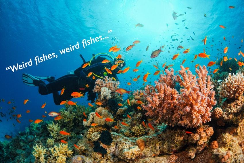 Radiohead-Lyrics-Weird-Fishes-Adventure-Motivational-Poster