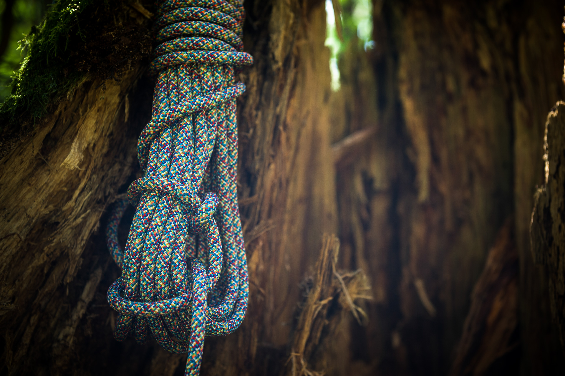 EDELRID Parrot Climbing Rope 9.8 mm