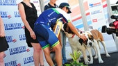 Johan Chaves, Tour de Suisse 2014, stage eight, dogs, pic: ©Sirotti