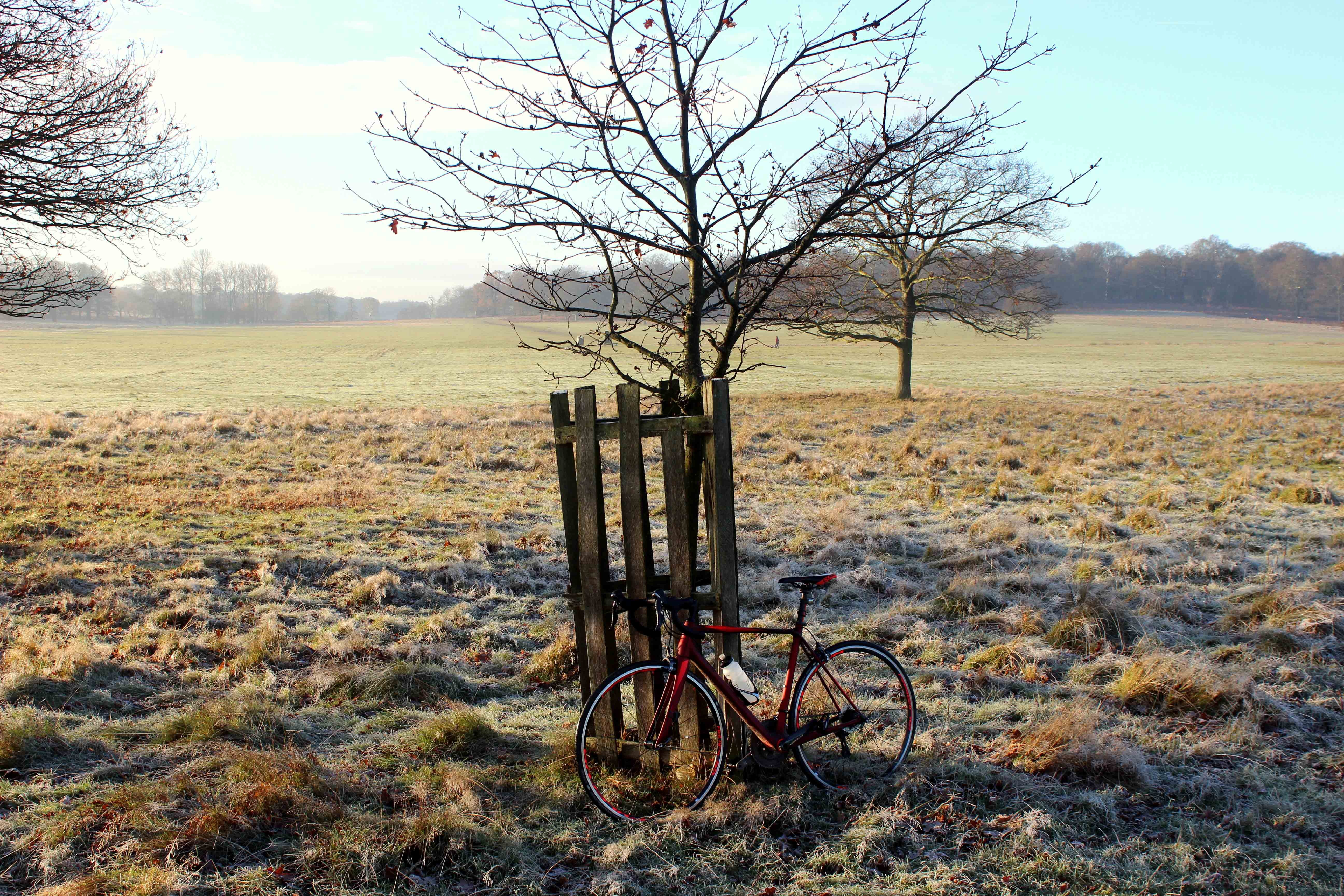 Richmond Park, winter, training, mist, ice, frost, fog, riding