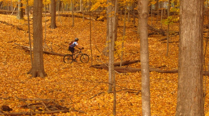 autumn mountain biking woods leaves
