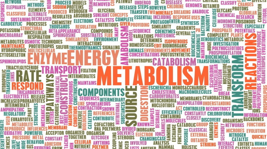 Metabolism myths explained